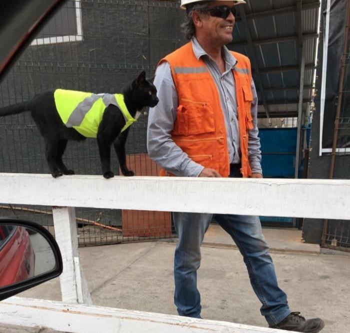 Construction Workers Put High-Visual Jacket On Black Cat So It Doesn't Get Hurt