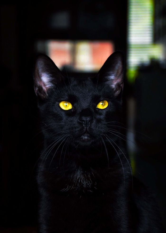 I Thought This Photo I Took Of My Black Cat Shows Off How Amazing Their Eyes Are