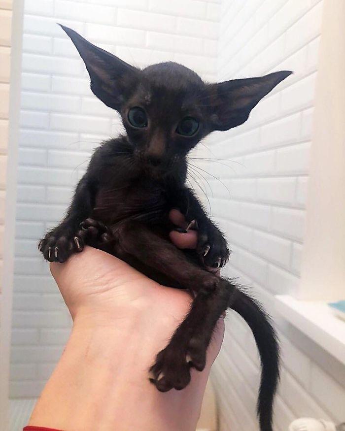 This Black Cat!