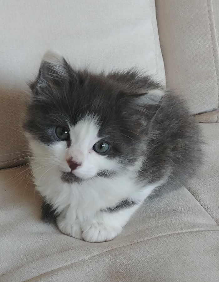Last Week Was The Purrrfect Time To Adopt A Kitten. She Sends You Teeny Kisses