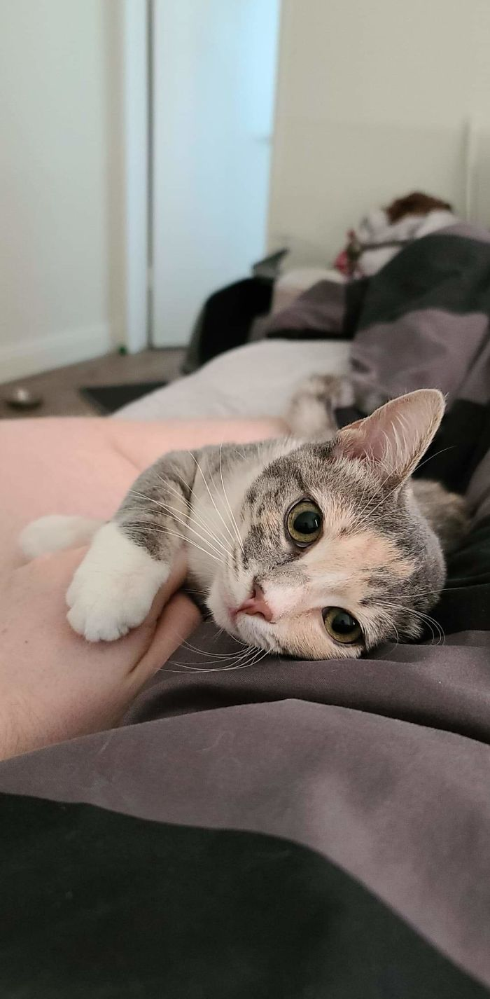 I Adopted 2 Kittens Last Week. After Many Days Of Not Seeing Them, I Woke Up To This Today
