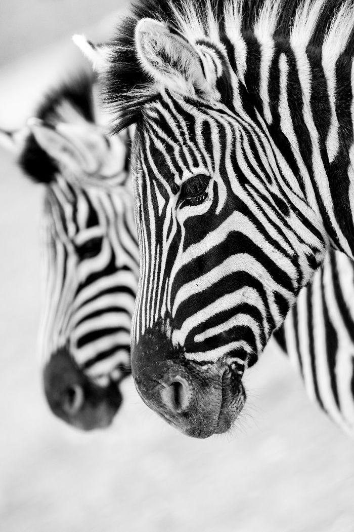 I Photograph Zoo Animals As If They Were Free