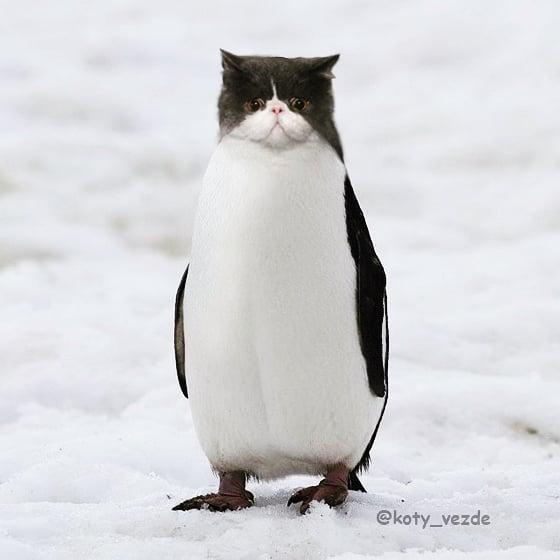 Funny-Animals-Photoshopped-Cats-Koty-Vezde