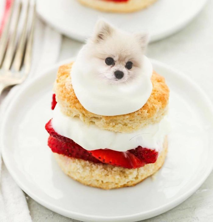 This Instagram Account Mixing Dogs With Food Will Amuse You