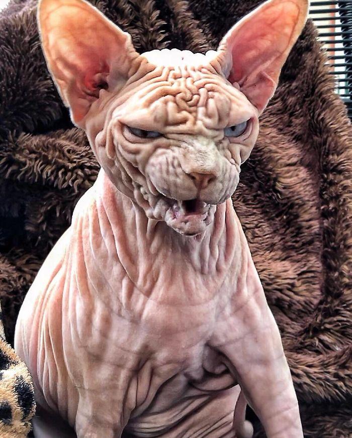 Freaky cat looks like its very angry | Metro News