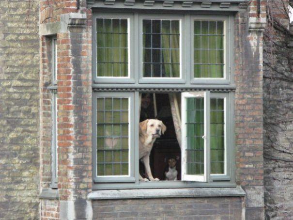 Bruges-Dog-2008-5e634ec03a135.jpg
