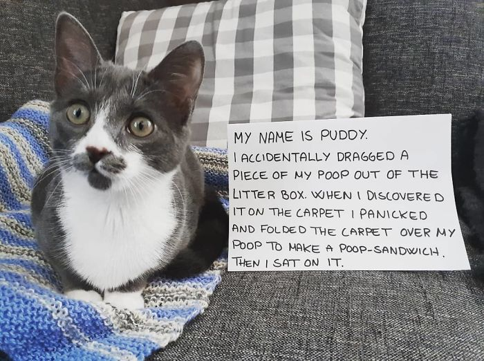 I Feel Like A Little Bit Of Cat-Shaming Is Ok Here
