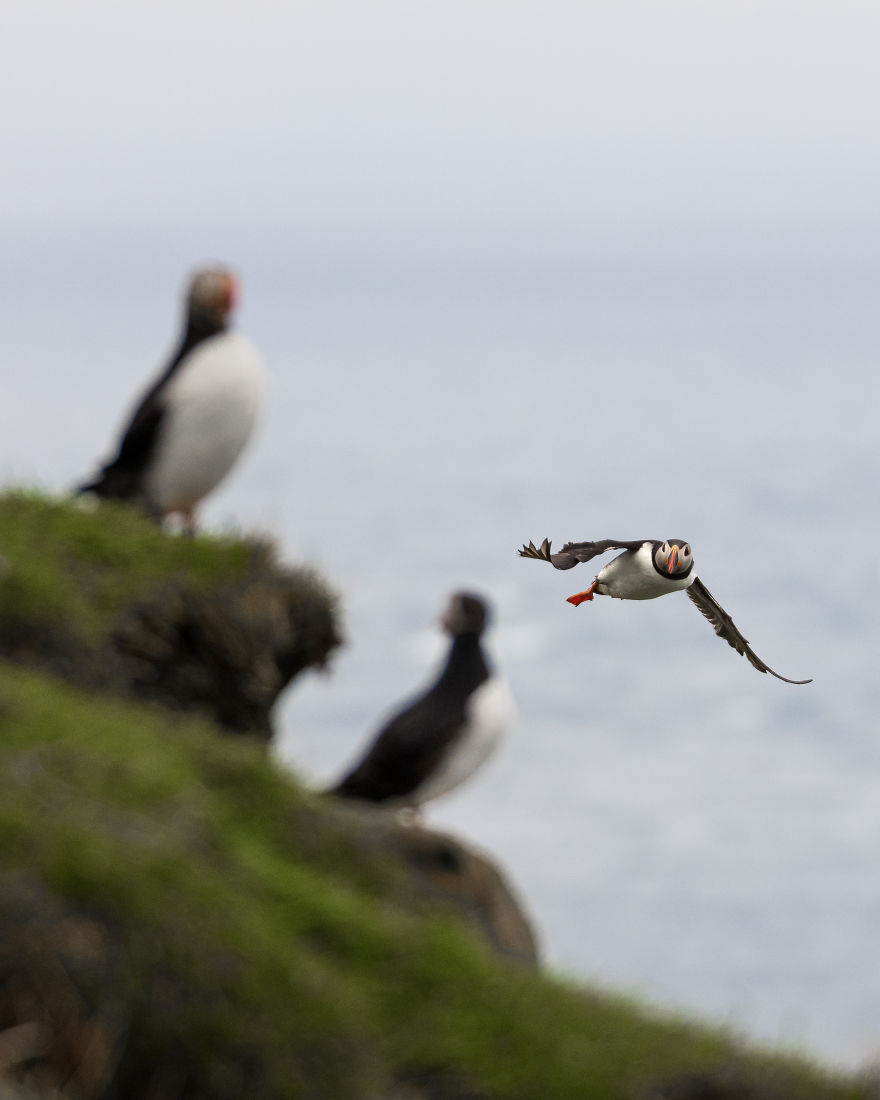 Contemplating And Taking Pictures Of Puffins Is One Of The Best Experiences I Ever Had