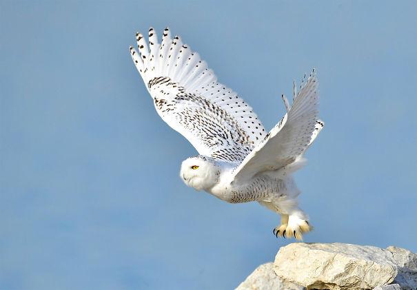 Owl-5e7b7fbf5a776.jpg