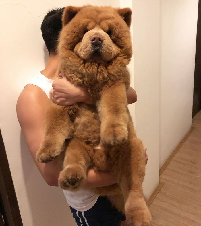 "People Do Not Know How To Deal With The Dog ""Teddy Bear"" That Already Has 430 Thousand Followers"