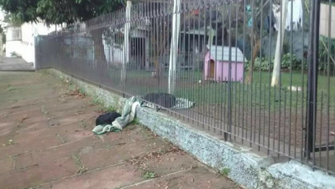 Puppy Drags Her New Blanket Outside To Share It With a Cold Homeless Dog