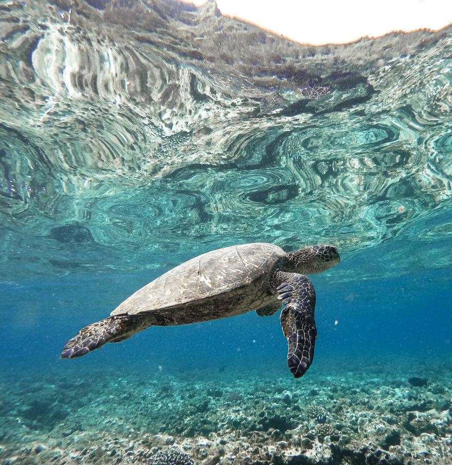 Snorkeling On The North Shore Of Kauai