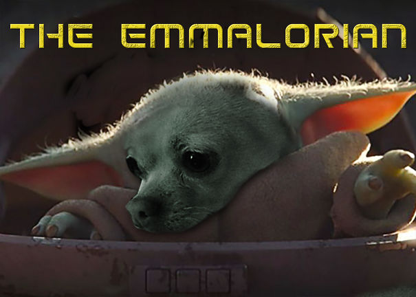 The-Emmalorian-5e77943629ba9.jpg