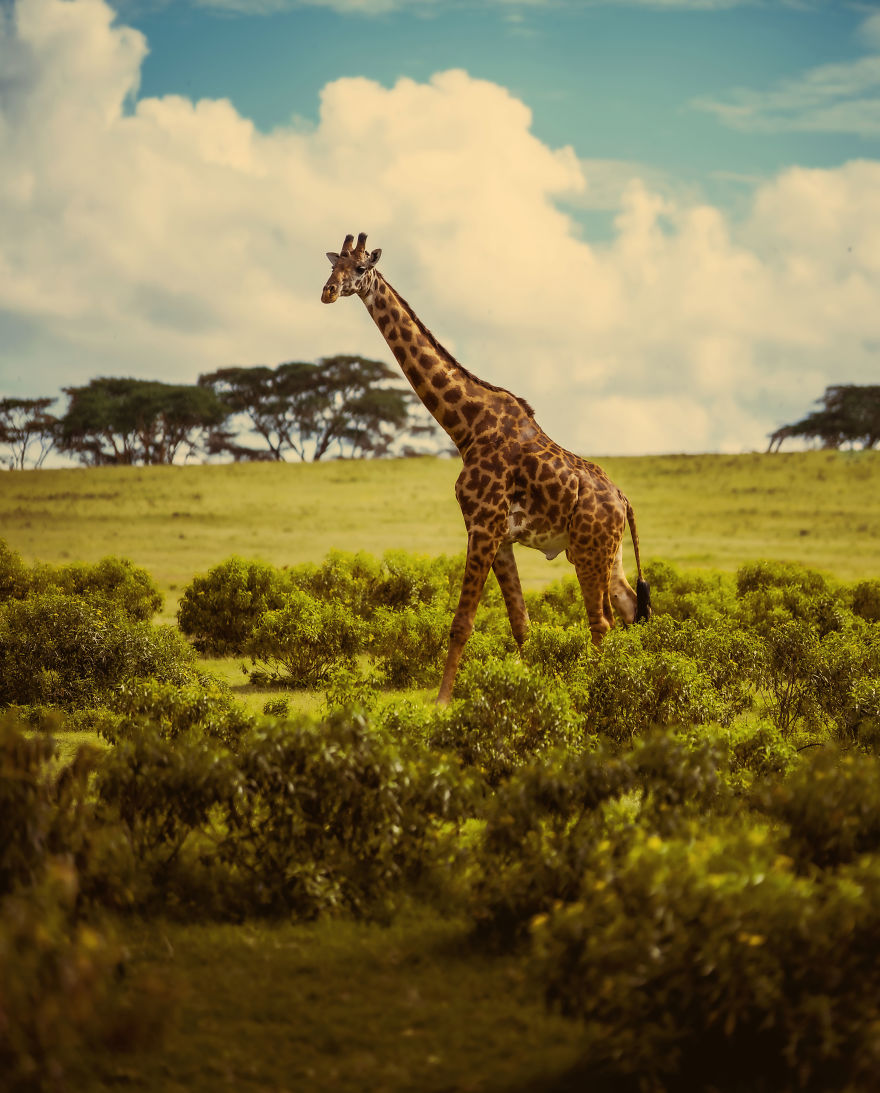 Beauty Of East Africa