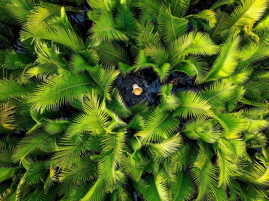 Nipa Palm Forest