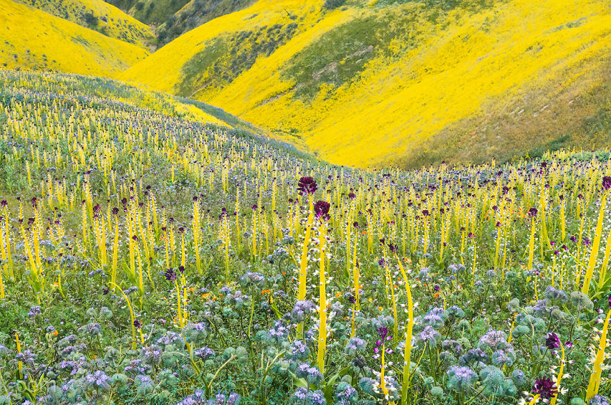 Here Are Our 28 Favorite Pics From Our Book About Wildflower Fields In California And Elsewhere