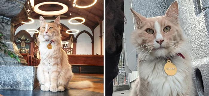 Este grupo de Facebook de 30.000 personas en Nueva Zelanda sirve para hacer fotos de un gato de la zona cada vez que se lo encuentran (30 fotos)