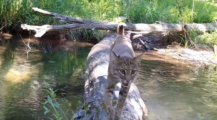 Man Films How Many Wild Animals Are Using This Log Bridge, Is Surprised It's That Many Different Kinds