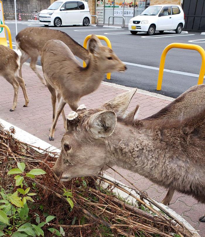 Manusia Mengkarantina Diri, Para Hewan Menginvasi Kota