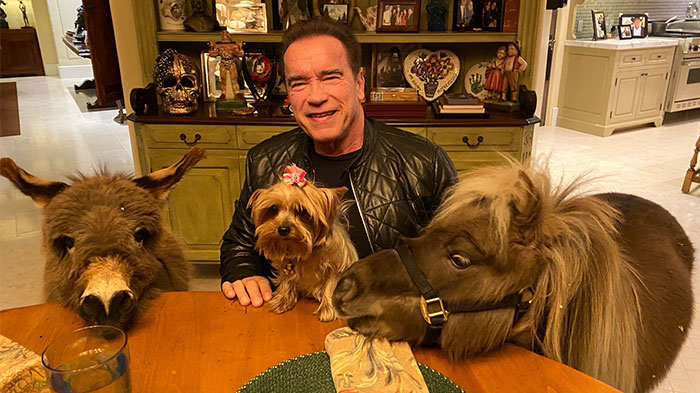 People Notice That Arnold Schwarzenegger Is Super Wholesome On Reddit, And Here Are 9 Examples