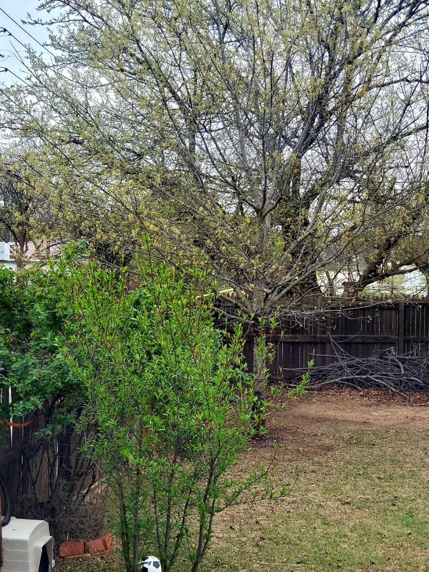 Out The Back Door, Burkburnett, Texas, USA