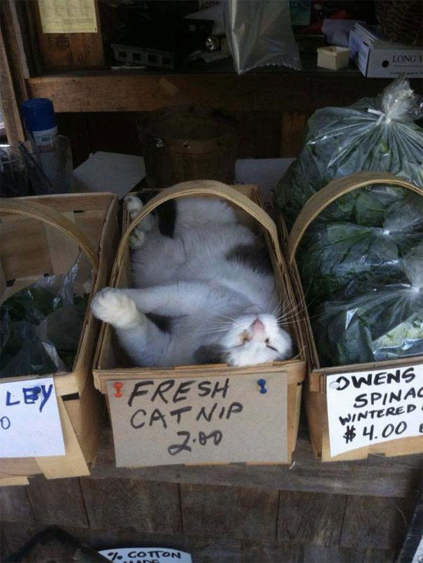 Gatos-dormindo-lugares-estranhos