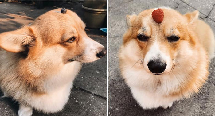 Zeta Disapproves Of Balancing Smol Berries On Her Head