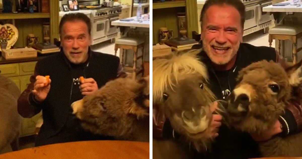 Arnold Schwarzenegger Is Self-Isolating At Home With His Mini Horse, Whiskey And Pet Donkey During Quarantine