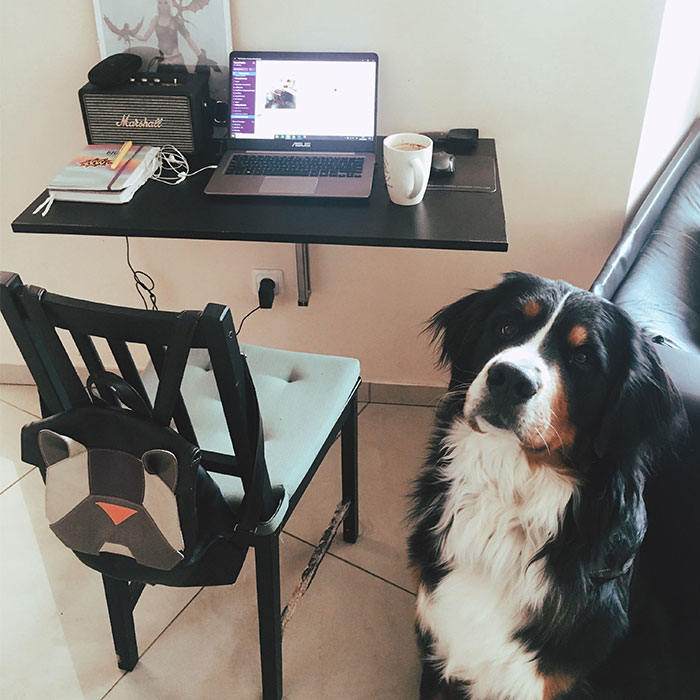 Hey, Pandas Who Are Now Forced To Work From Home, Post Your Workspace Setups