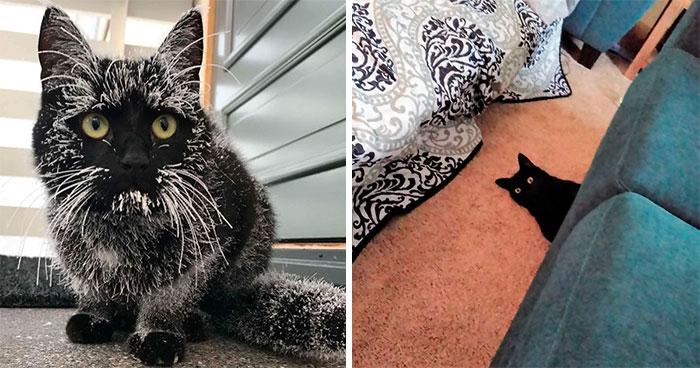 40 Reconfortantes fotos de gatos negros para demostrar que no tienen nada que ver con la mala suerte