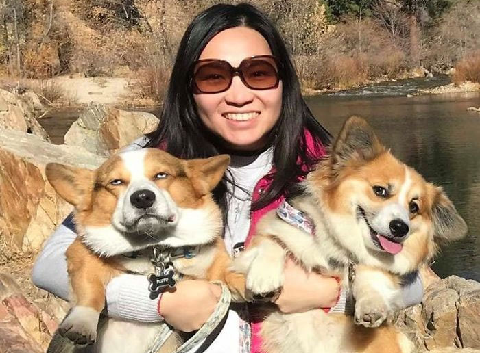 There's A Facebook Group Dedicated To Pics Of Disapproving Corgis And Here Are 30 Of The Best Ones