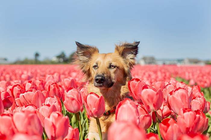 I Capture My Traumatized Rescue Dog's Happy Moments Among Flowers (22 Pics)