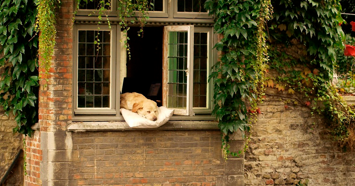 People Are Remembering The 'Most Photographed Dog In Bruges' Who Became Famous For Sleeping On A Windowsill