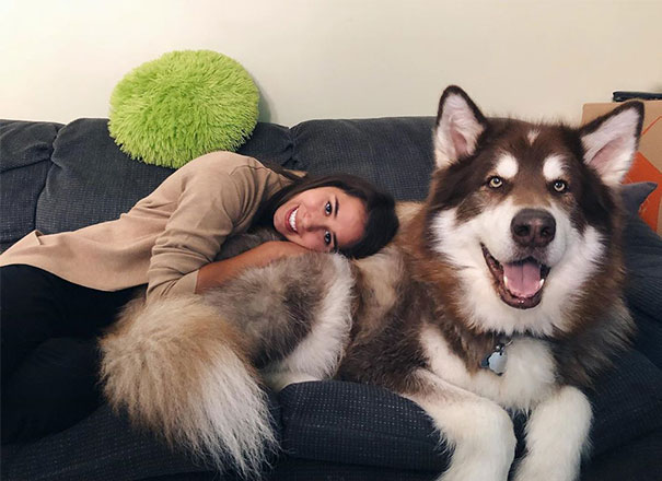 Because Dogs Are The Best Cuddle Buddies