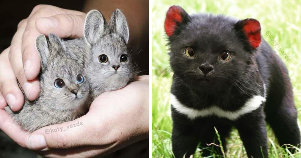 Someone Imagines What Everything Would Look Like If It Had A Cat's Face And The Result Is Funny Yet Disturbing (126 New Pics)