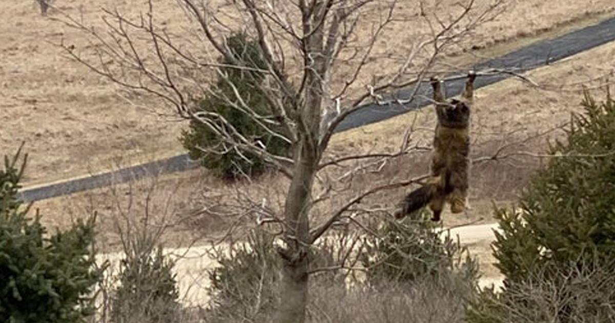 These Owners Couldn't Find Their Cat, So They Looked Out The Window And Saw It Hanging On A Tree