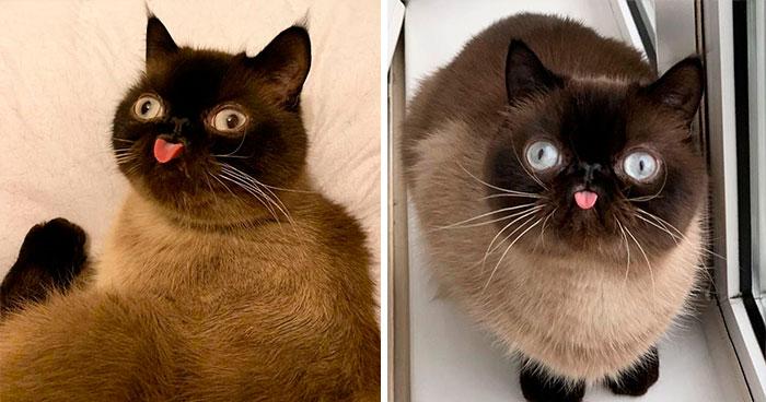 Este es Ikiru, el gato con la lengua fuera que ha conquistado internet (30 fotos)