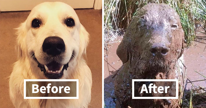 30 Reasons You Should Never Let Your Dog Play In The Mud (New Pics)