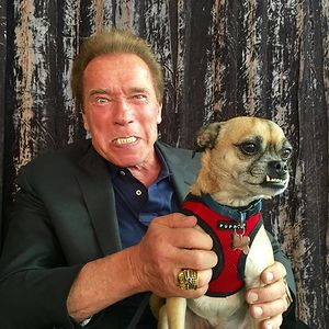 SchwarzeneggerPanda