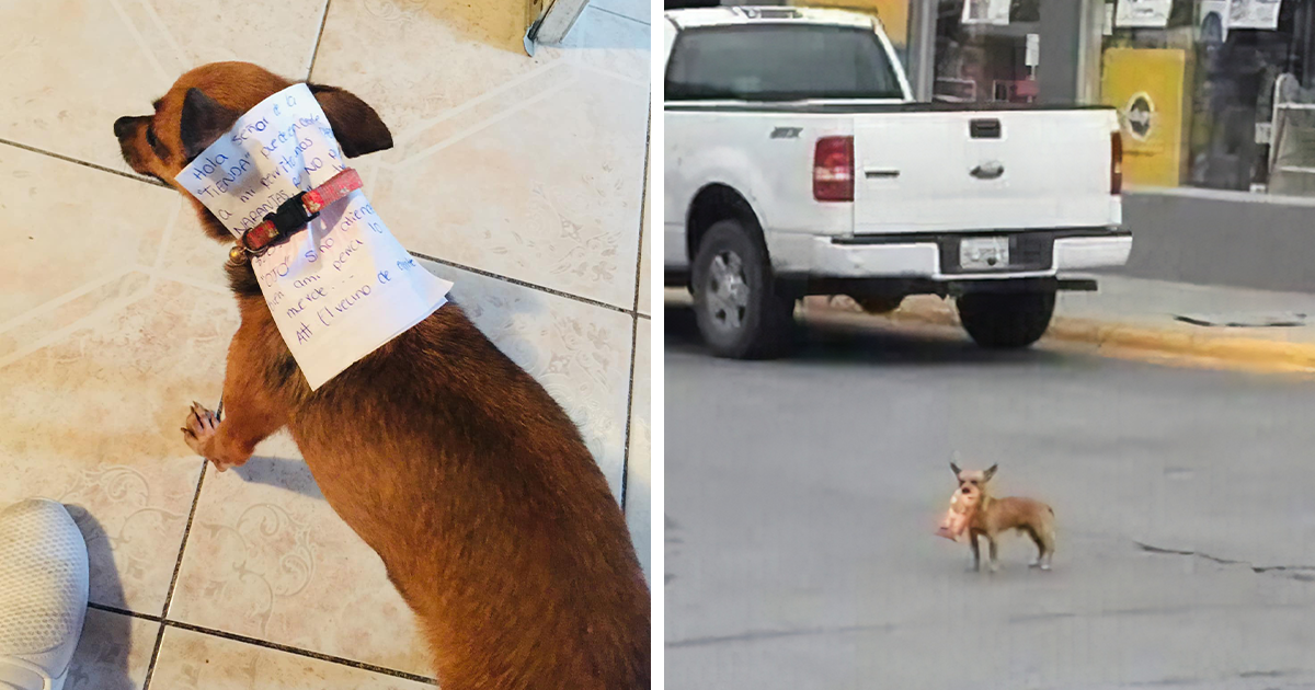 This Quarantined Guy Sends His Dog On A Mission To Buy Cheetos And He Delivers