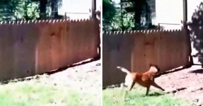 Hilarious Video Of A Man Showing Off His New Fence To Keep His Dog From Running Away Is Going Viral Again