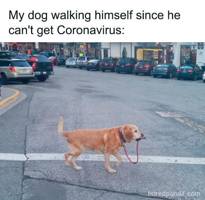 Coronavirus-Jokes
