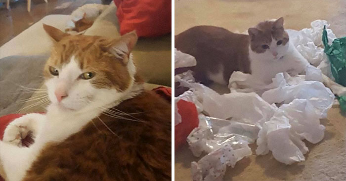 Daughter Shares Hilarious Cat Updates She Receives From Her Mom While She Stays Over At Her BF's House