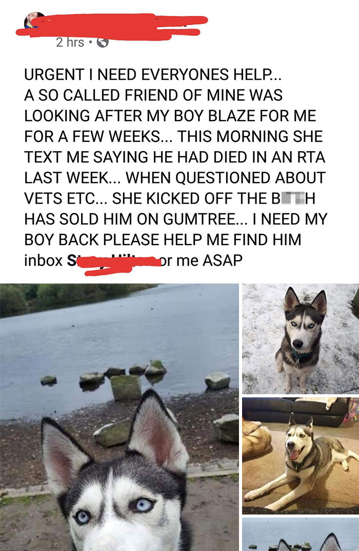 Absolute Jerk Sells Her Friend's Dog. Who Would Do That?