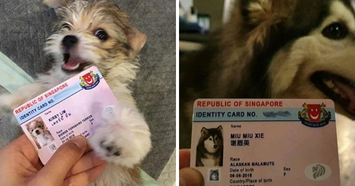 Singapore Now Issues Adorable Running Licenses For Dogs That Double As Their Personal IDs