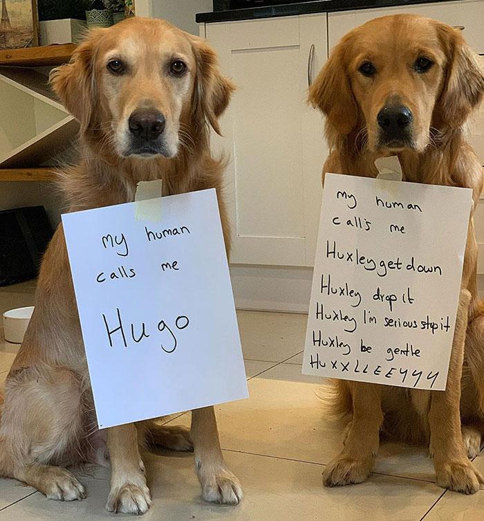 Mi humano me llama Hugo. / Mi humano me llama Huxley abajo, Huxley suéltalo, Huxley, para ya en serio, Huxley, sé amable, HUXLEYYY