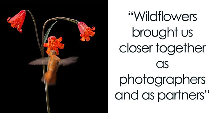 We Have Been Taking Pictures Of Wildflowers For 27 Years, Here Are 28 Of Our Favorites