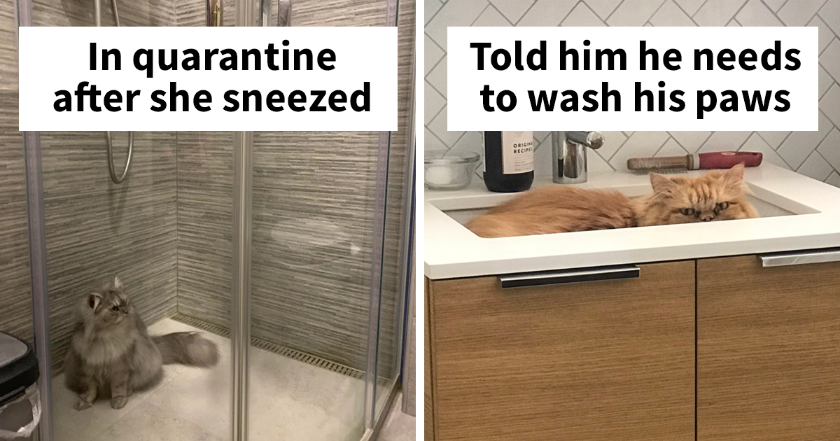 People Are Sharing Photos Of Their Cats In Quarantine And Here Are 32 Of The Best Ones