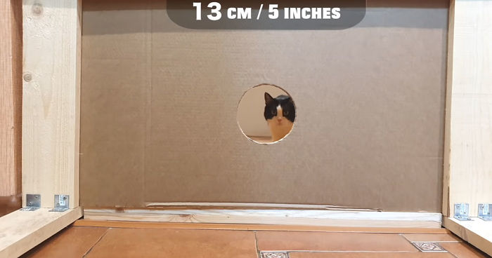 Owners Keep Reducing The Size Of A Hole For Their Cat To See When It Will Finally Stop Him
