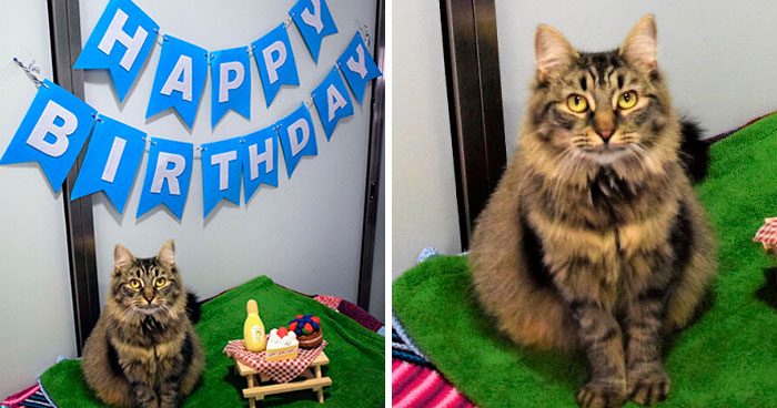 Shelter Workers Organize This Cat's Birthday Hoping Someone Will Adopt Her, But No One Turns Up